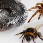 страх насекомых
